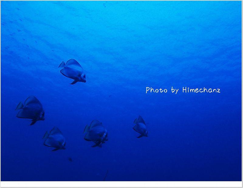 今日も群れてくれてました!アカククリ photo by OLYMPUS STYLUS TG-2 Tough