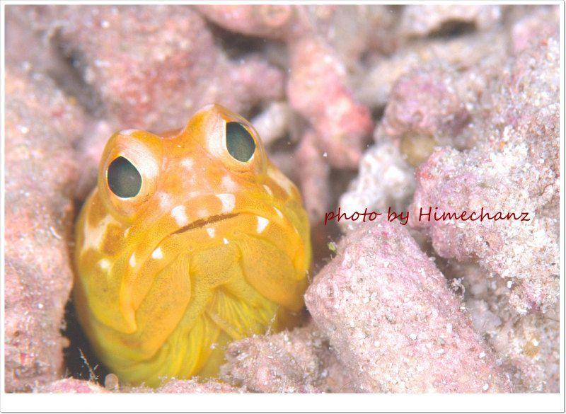 黄色いジョーフィッシュ photo by Nikon D300