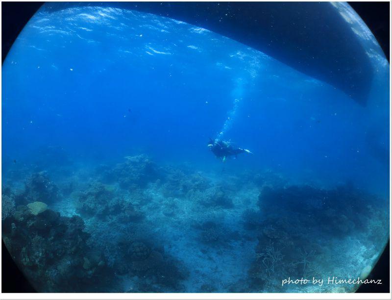のんびりまったり遊泳♪ photo by CANON PowerShot S100
