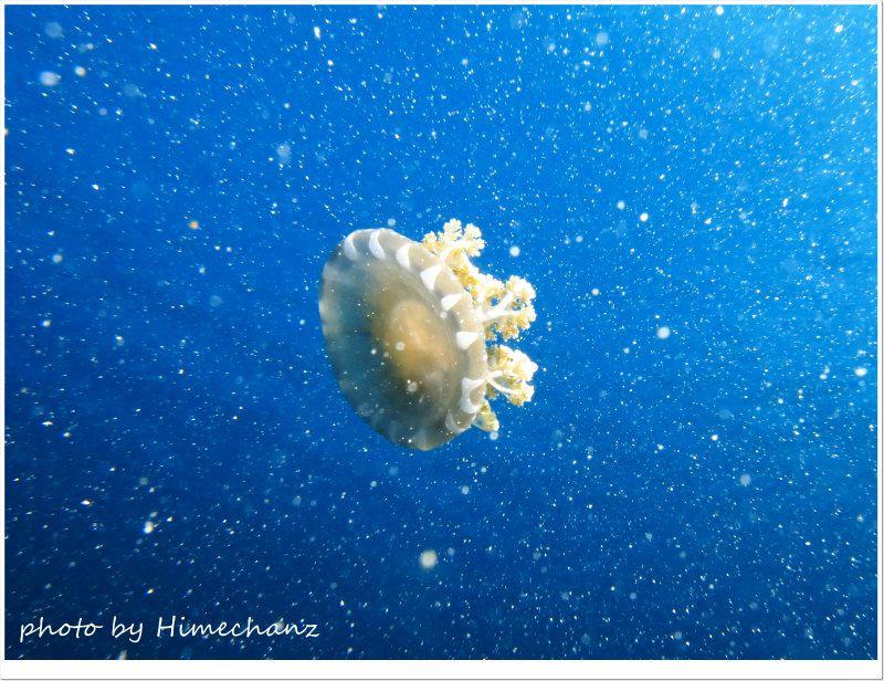 宇宙を漂うサカサクラゲw photo by CANON PowerShot S100
