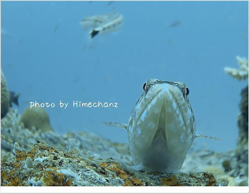 小魚狙ってます!(エソ) photo by OLYMPUS STYLUS TG-2 Tough