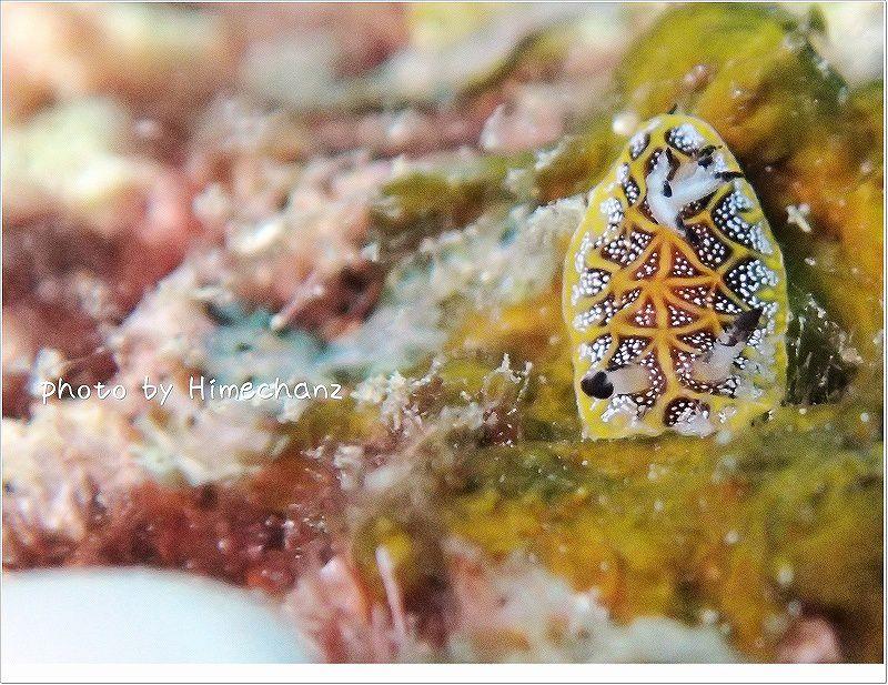 極小サイズ!モザイクウミウシ(左下の白いのは私の指!) photo by OLYMPUS STYLUS TG-2 Tough