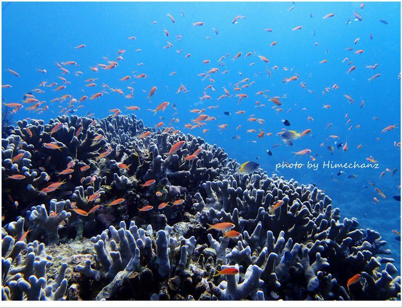 アカネハナゴイの群れ photo by OLYMPUS STYLUS TG-2 Tough