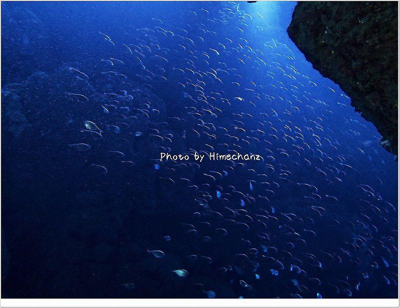 ケーブ内はハタンポでいっぱい! photo by OLYMPUS STYLUS TG-2 Tough