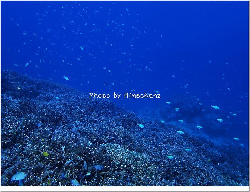 美しいサンゴ畑 photo by OLYMPUS STYLUS TG-2 Tough