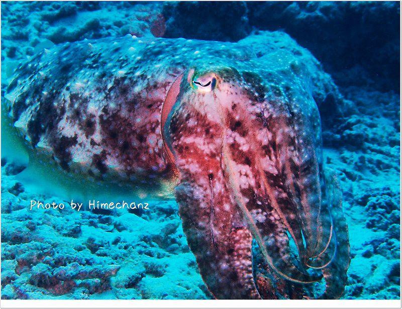 コブシメ~ photo by OLYMPUS STYLUS TG-2 Tough