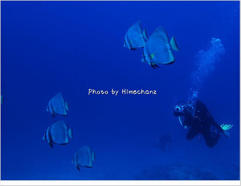 アカククリも群れてました! photo by OLYMPUS STYLUS TG-2 Tough