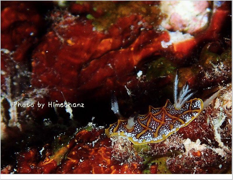モザイクウミウシ photo by OLYMPUS STYLUS TG-2 Tough
