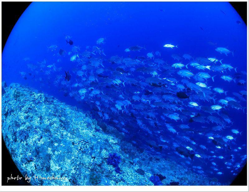 ギンガメアジの群れに囲まれたらテンションアゲアゲです♪ photo by CANON PowerShot S100