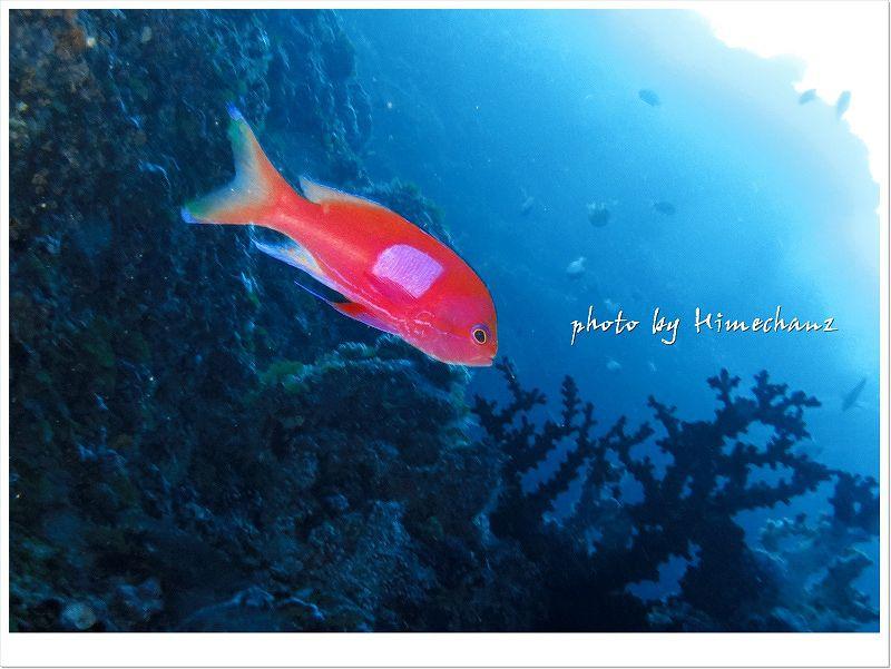 色鮮やかなお魚も勿論いますよ♪ photo by CANON PowerShot S100
