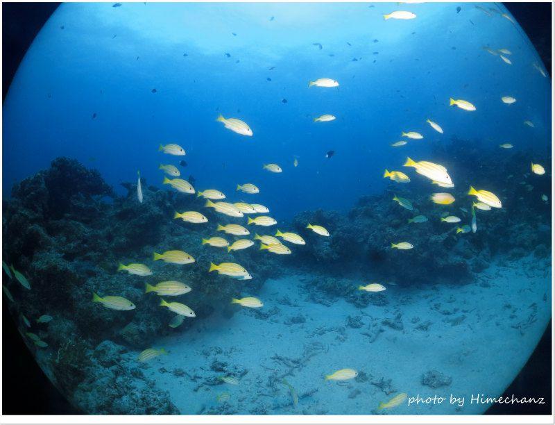 ヨスジフエダイの群れを見ると癒やされますよね♪ photo by CANON PowerShot S100