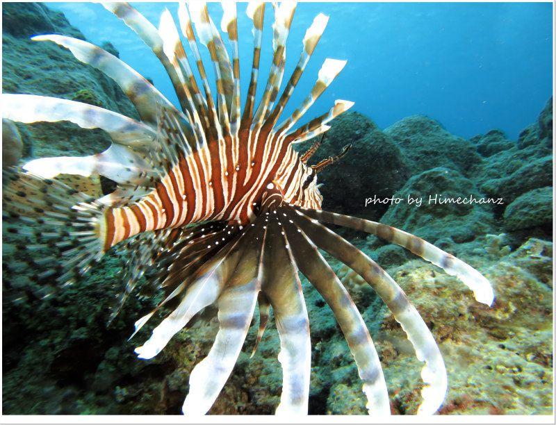 ハナミノカサゴ photo by CANON PowerShot S100
