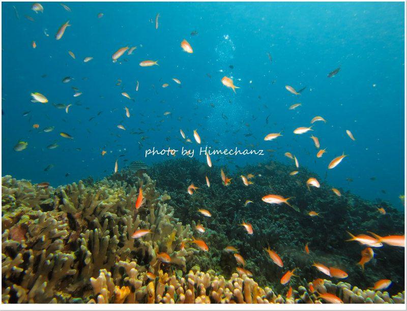 アカネハナゴイとキンギョハナダイの群れ photo by CANON PowerShot S100