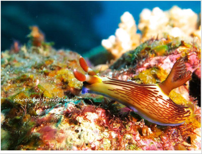 クロスジリュウグウウミウシ photo by CANON PowerShot S100