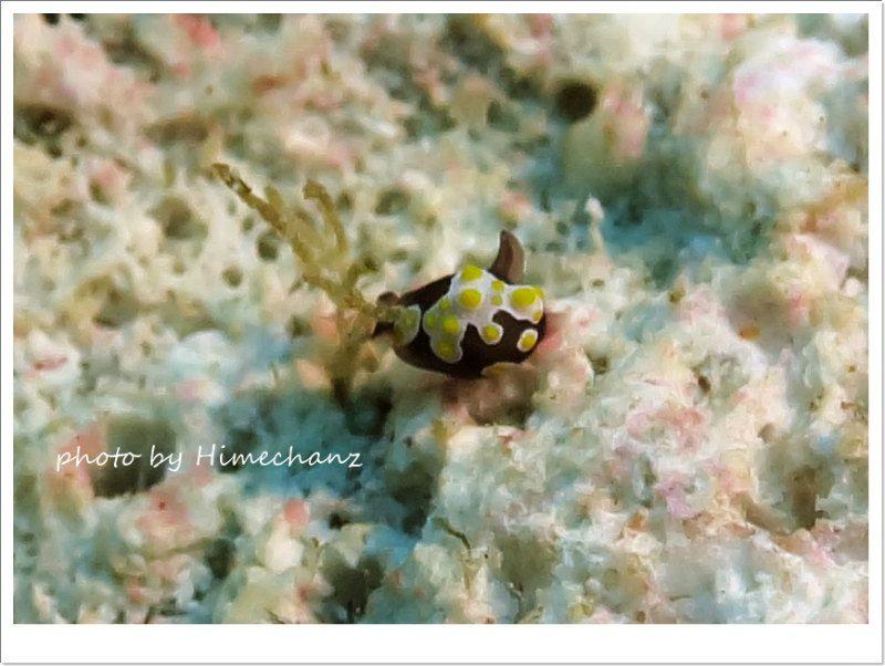 米粒より小さいトンプソンアワツブガイ photo by CANON PowerShot S100