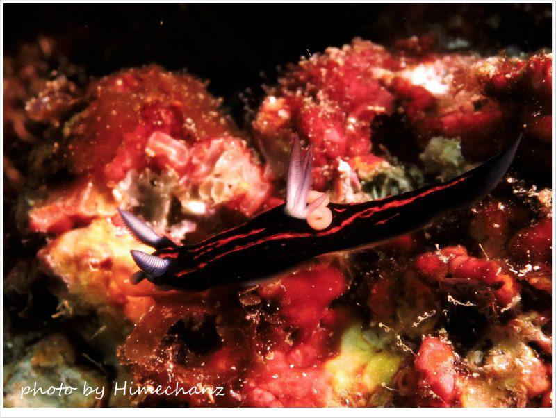 寄生虫付きのリュウグウウミウシ photo by CANON PowerShot S100