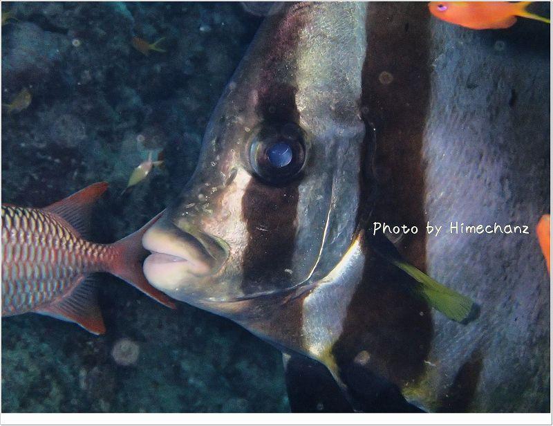 顔がとがっているのがアカククリ photo by OLYMPUS STYLUS TG-2 Tough