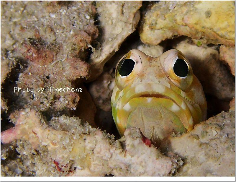 ずっと見てたい。ジョーフィッシュ。 photo by OLYMPUS STYLUS TG-2 Tough