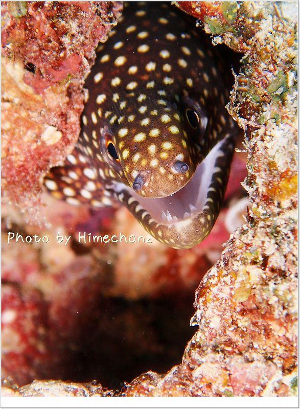 ハナビラウツボ幼魚 photo by OLYMPUS STYLUS TG-2 Tough