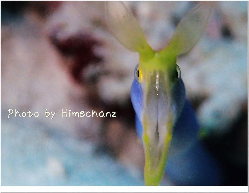 スーパーマクロモードで撮ってみたハナヒゲウツボ photo by OLYMPUS STYLUS TG-2 Tough