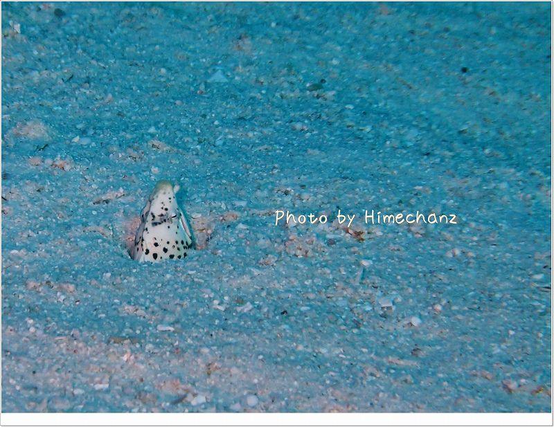 ちっこいちっこいホタテウミヘビ photo by OLYMPUS STYLUS TG-2 Tough