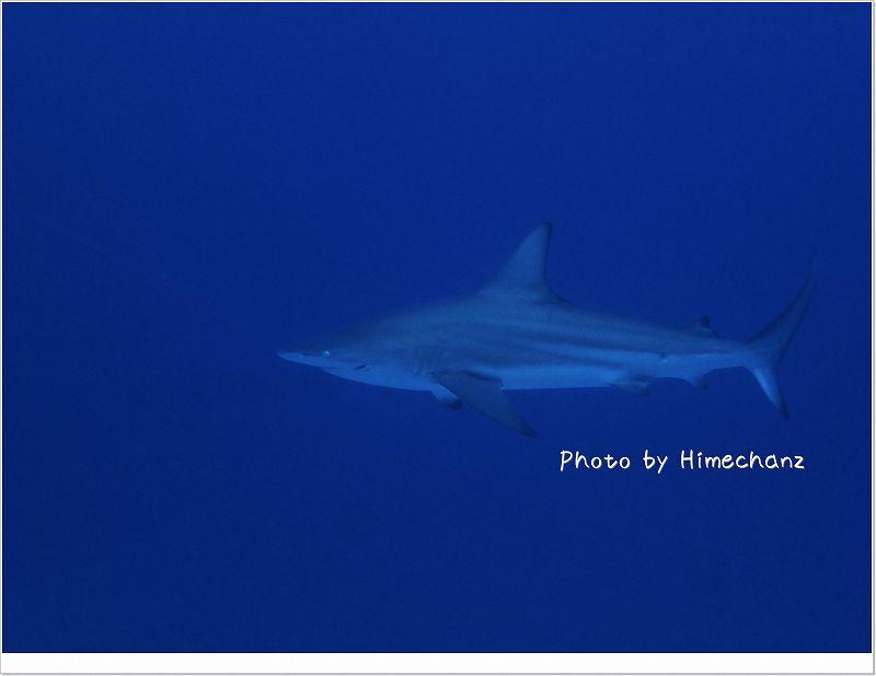 めっちゃ近くまできた!メジロザメ!! photo by OLYMPUS STYLUS TG-2 Tough