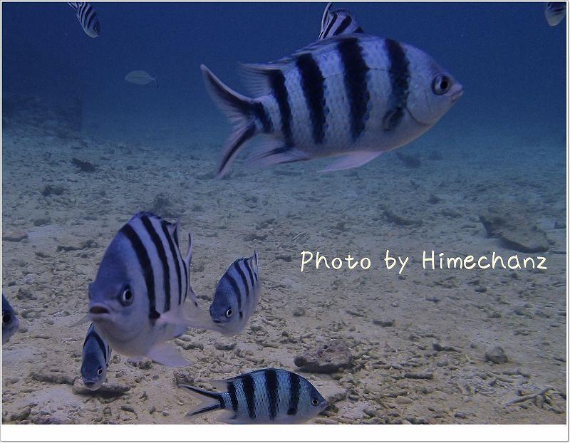 左上の方にいるのがカスミアジ photo by OLYMPUS STYLUS TG-2 Tough