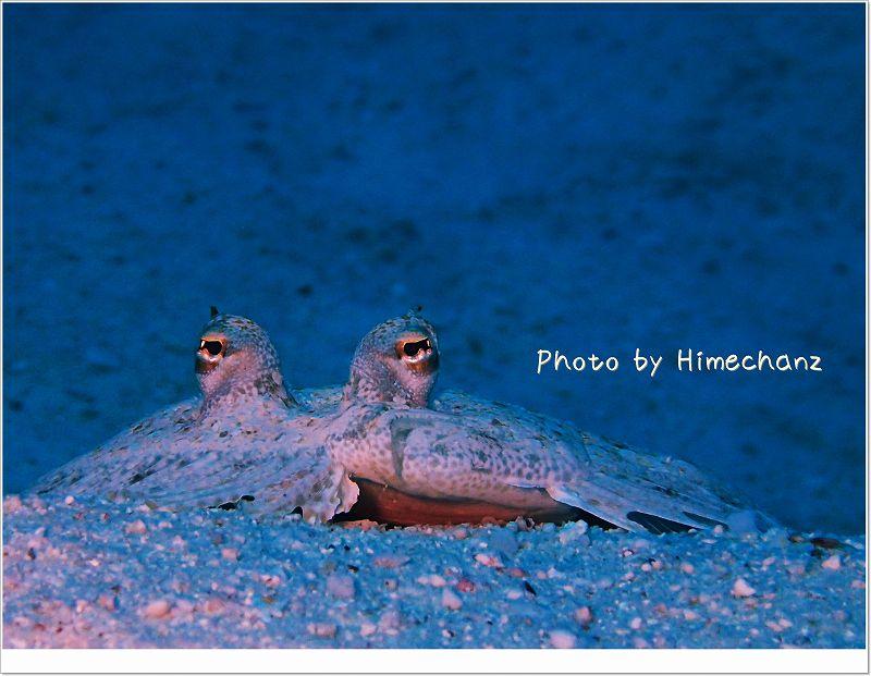 トゲダルマガレイ photo by OLYMPUS STYLUS TG-2 Tough