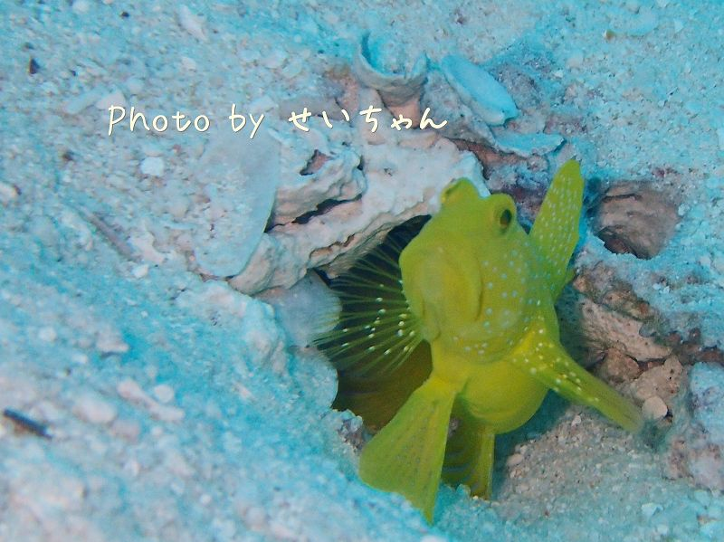 ギンガハゼ photo by OLYMPUS STYLUS TG-2 Tough