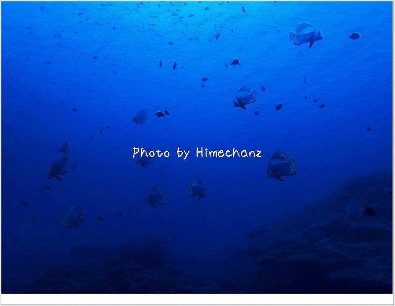 アカククリの群れ(影ですが) photo by OLYMPUS STYLUS TG-2 Tough