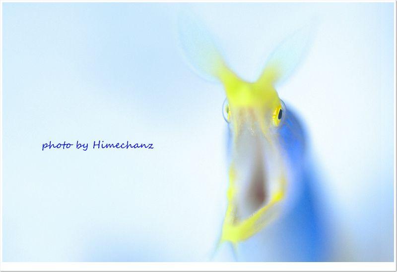 たまにはゆる~い感じで撮影してみました♪ハナヒゲウツボ photo by Nikon D300