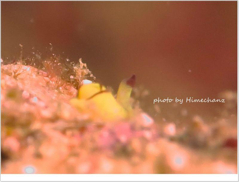 今日もいっぱいいたなぁオレンジウミコチョウ photo by CANON PowerShot S100