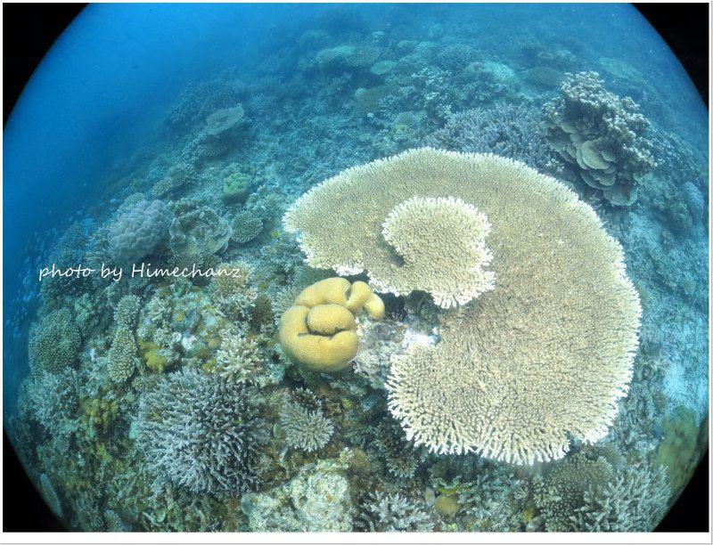 サンゴがとってもキレイで元気でしたよ♪ photo by Canon PowerShot S100