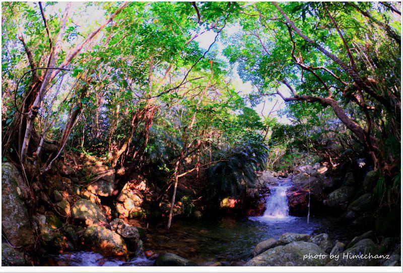 1月なのに緑の青々とした雰囲気が良かったです! photo by NIKON D300