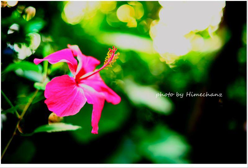ピンク色のお花が南国を感じさせてくれますね♪ photo by NIKON D700