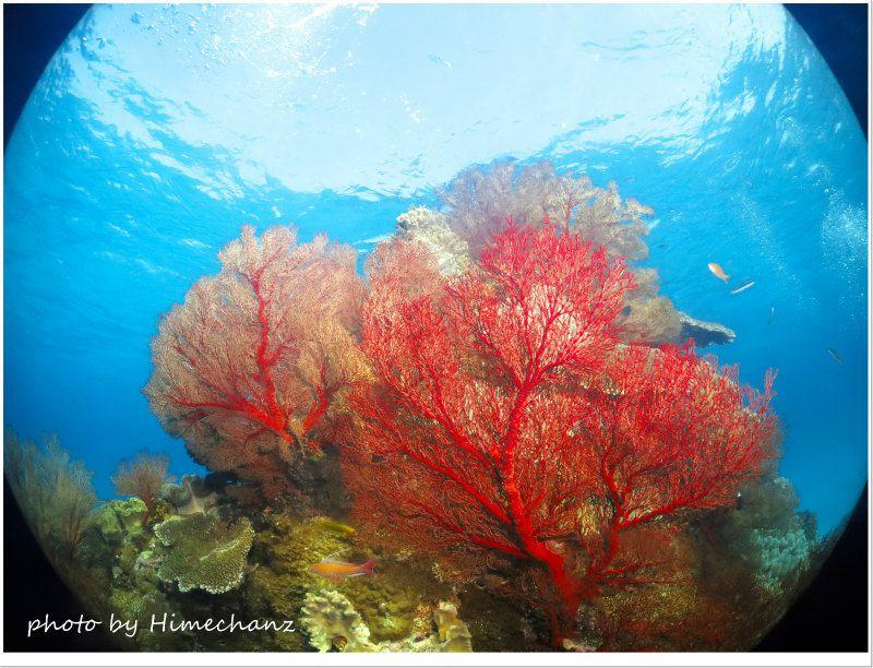 青い海に赤が映えますよね! photo by CANON PowerShot S100