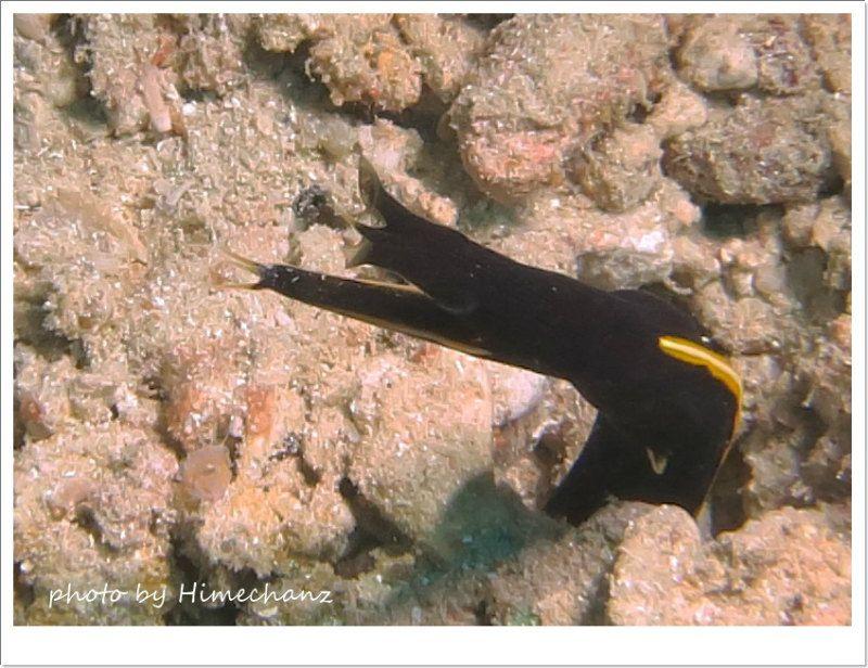 ハナヒゲウツボ幼魚 photo by CANON PowerShot S100