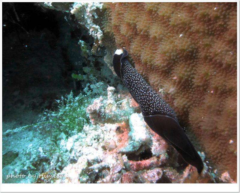 ウミウシ大好きのきょうちゃんが根性で見つけたオハグロツバメガイw photo by CANON PowerShot S100