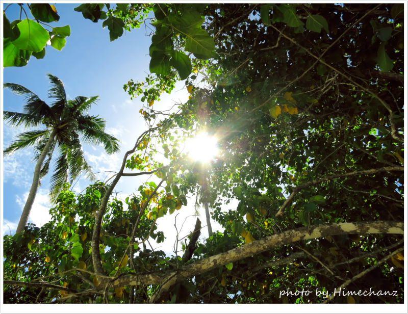 木漏れ日が心地よかった♪ photo by CANON PowerShot S100