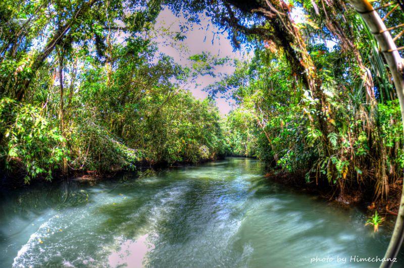 ジャングルリバーを心地よくクルージングします♪ photo by Nikon D300