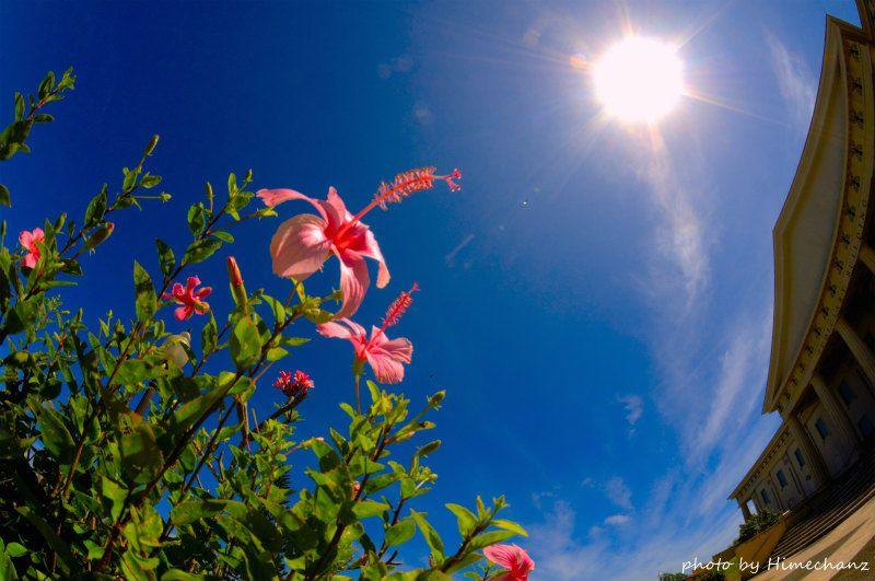 めちゃくちゃ天気が良くて超気持ちいい♪ photo by Nikon D300