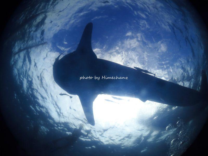 ふと見上げると、ジンベイザメ!!! photo by CANON PowerShot S100