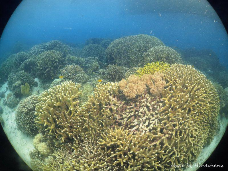スミロン島のサンゴたち。 photo by CANON PowerShot S100