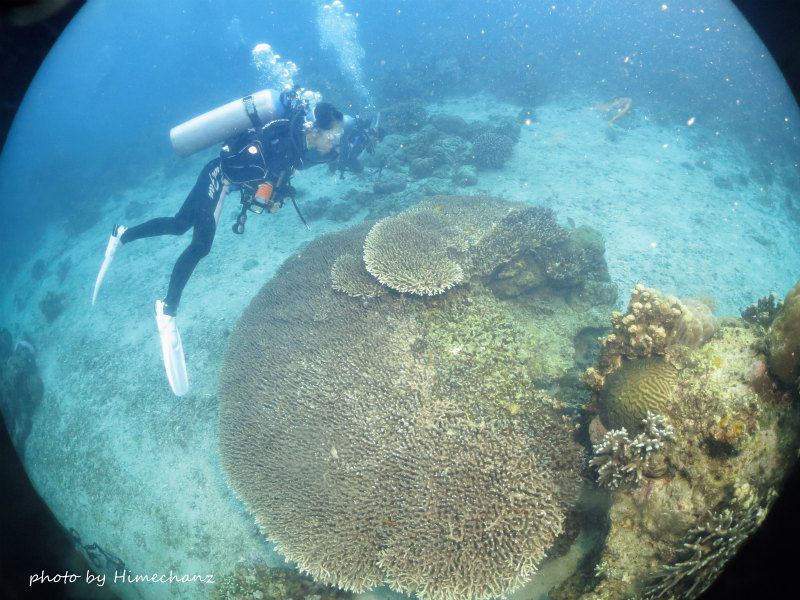 ダイバー人口が少ないのか、破壊されていない元気なサンゴが沢山でした! photo by CANON PowerShot S100