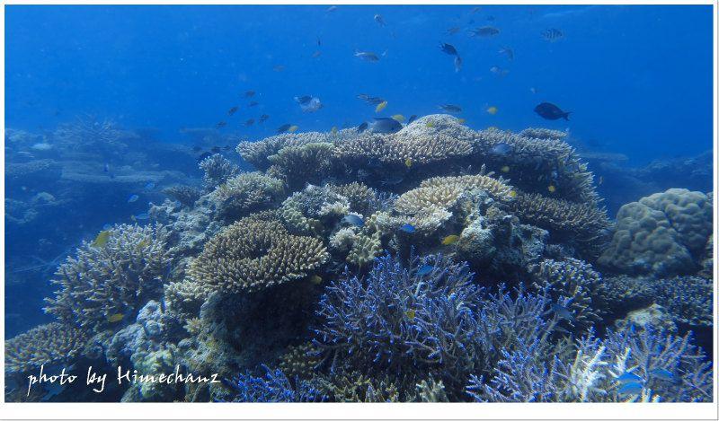 名蔵湾のサンゴ礁♪ イロトリドリのサンゴの景色に、今年もいっぱい魅了されたいですねw photo by CANON PowerShot S100