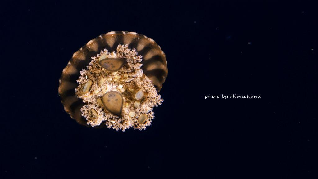 クラゲも撮り方をちょいと工夫すると宇宙っぽくなりますw