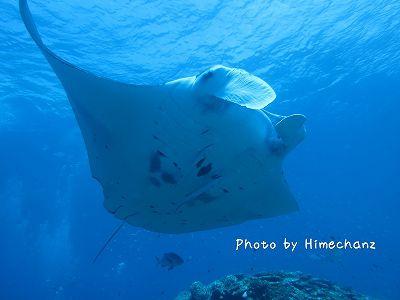 サンゴ20120812 MCPにて