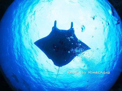 サンゴ20121030 MCPにて